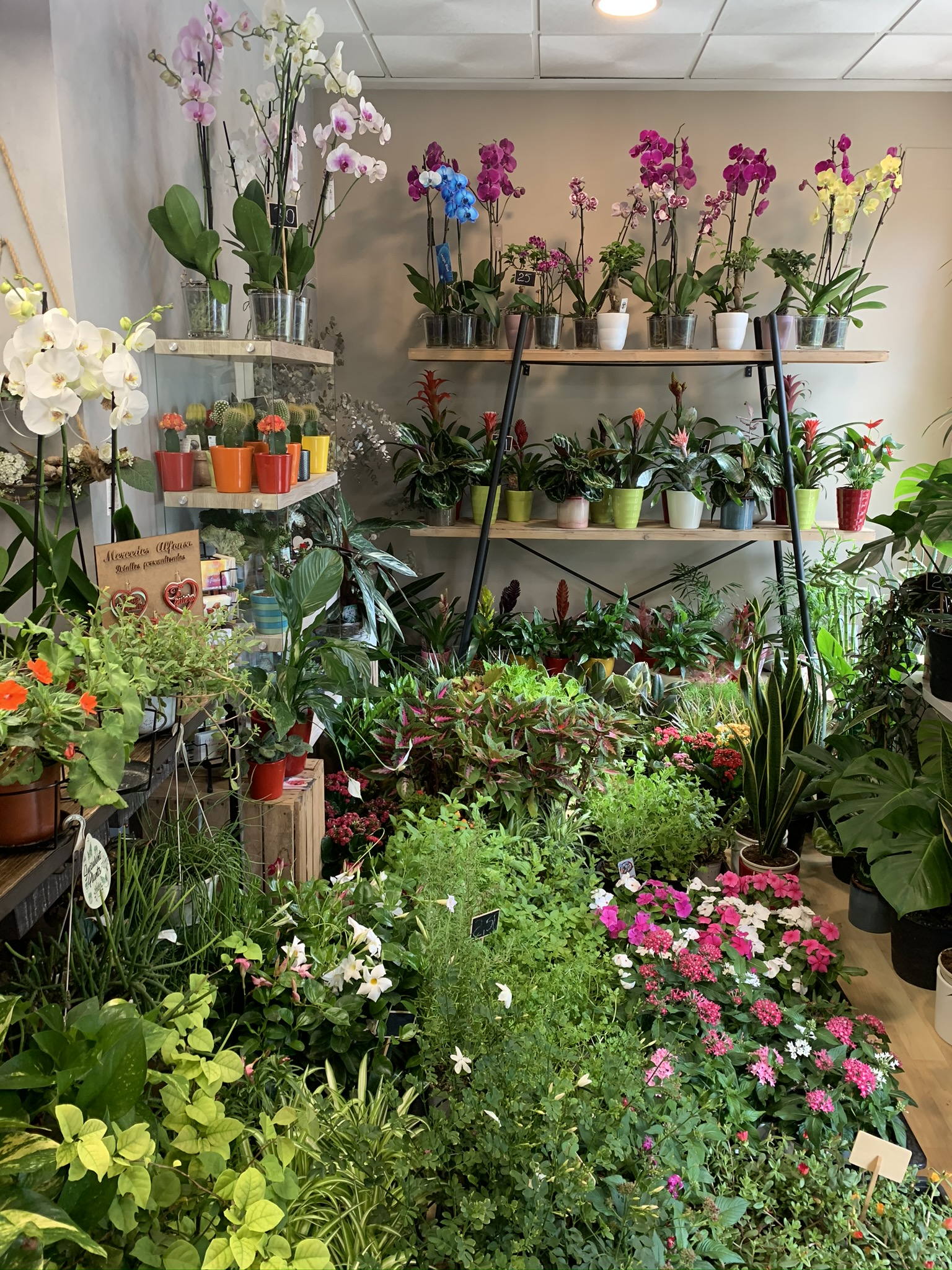 Innovacion Floral